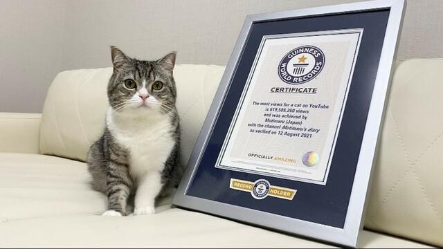 もちまる日記 最も視聴された猫としてギネス認定された訳とは?